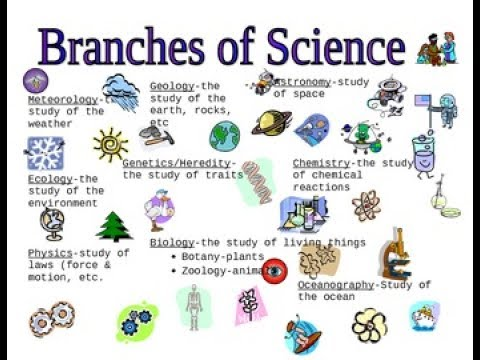 Worksheet Branches Of Science the branches of science