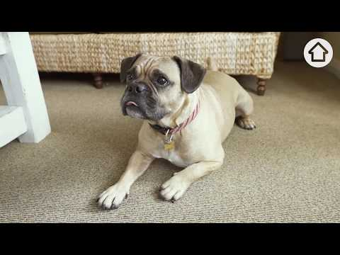 Cleaning Hacks: How to remove pet urine from your carpet