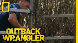 Securing the Croc Trap | Outback Wrangler
