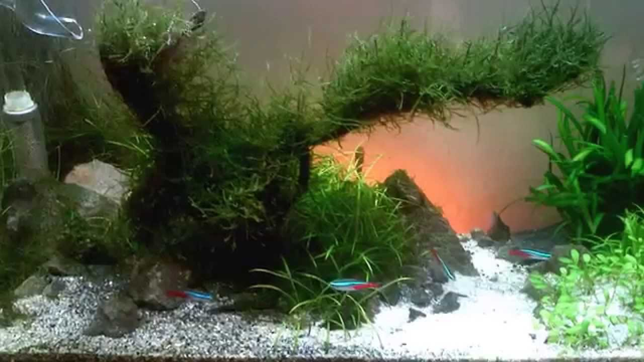 10g DIY aquascape - Moss Tree - Progress video - YouTube