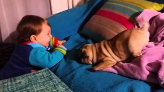 Baby Girl Vs Baby Pug