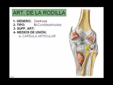 ARTICULACION DE LA RODILLA - YouTube