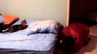 Смешные коты!!! Кот испугался Funny cats, Прикольные, ржачные,веселые коты,кошки ,котята1
