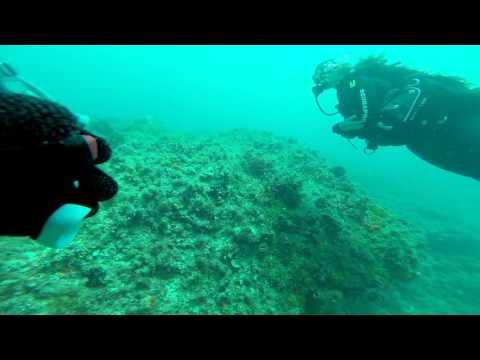 rottness Island Dive 2 trench warfare area