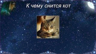 К чему снится Кот (Сонник)
