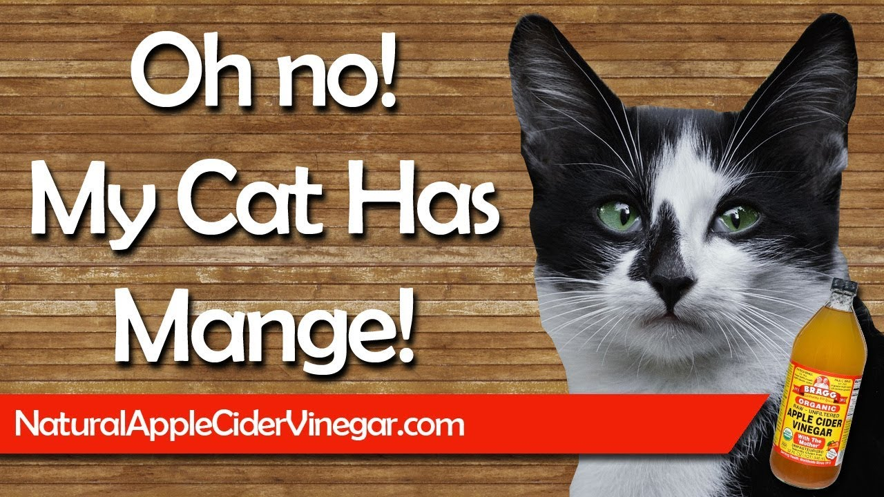 How To Naturally Cure Cat Mange With Le Cider Vinegar