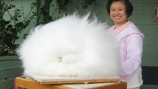 8 Of The World's Fluffiest Animals You Just Have To See Right Now!