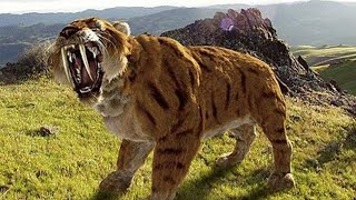 Sabertoothed Tiger | Prehistoric Cats Documentary