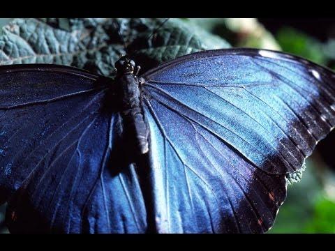 VIRIDIA - Tecnología Natural Episodio 1 - La Magia del Movimiento - Los Secretos de la Naturaleza