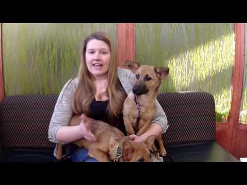 Elmhurst Animal Care Center Client Testimonial: Amanda With Bonnie & Clyde