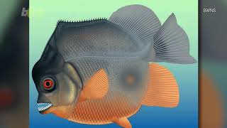 Remains of Ancient Piranha-Like Fish Discovered in a Quarry