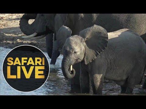 safariLIVE - Sunset Safari - June 25, 2018