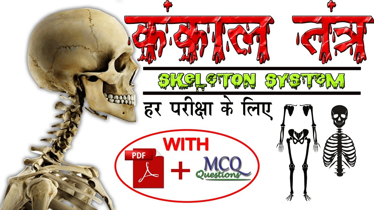 Biology Gk Tricks | Classification of Bones in Human Body
