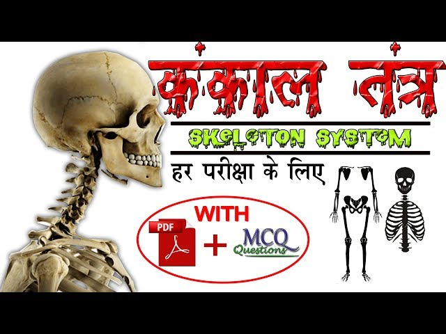 Biology gk tricks : Classification of Bones in Human body | Skeletal System in hindi