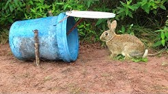 Amazing Quick Rabbit Trap Using Plastic Buckets - Easy Best Rabbit Traps With Buckets Work 100%