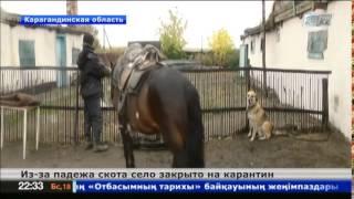 Лошади гибнут от опасной болезни в Карагандинской области