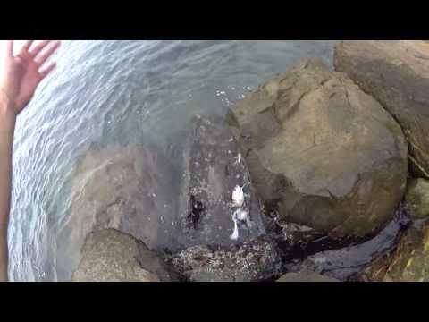 Rockfish 2019 Сочи 21 июля карась ерш дельфины Игорь Зинковский