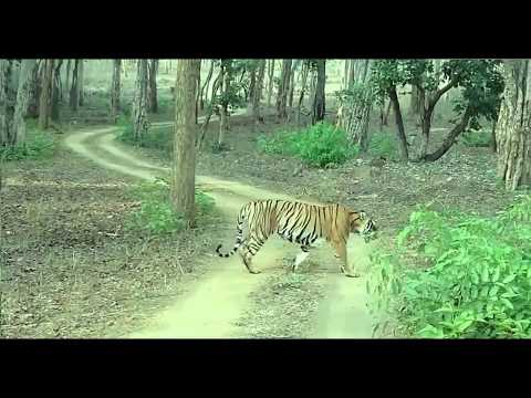 Nagarhole National Park  : Open Zipsy Safari : Tiger | Elephant | Deer | Bison