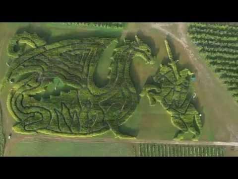 Treworgy Corn Maze