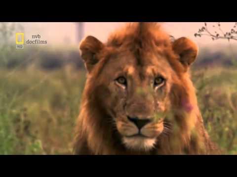 Những cuộc chạm trán trên thảo nguyên - Thiên nhiên hoang dã full HD Thuyết minh