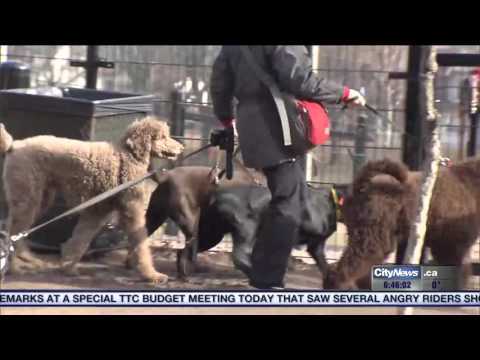 Video: Tips to find the right a dog walker