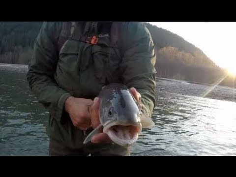 ALMOST DROWNED IN ICY WATER!?  - Catching raging Bulltrout!