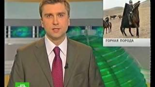 Карачаевская порода лошадей