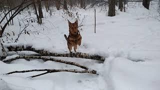 Пожилой щенок совершает прыжок через дерево