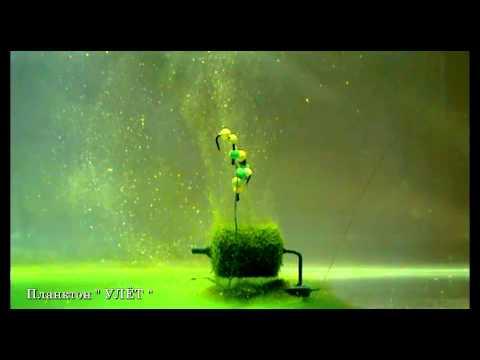 технопланктон донный гейзер