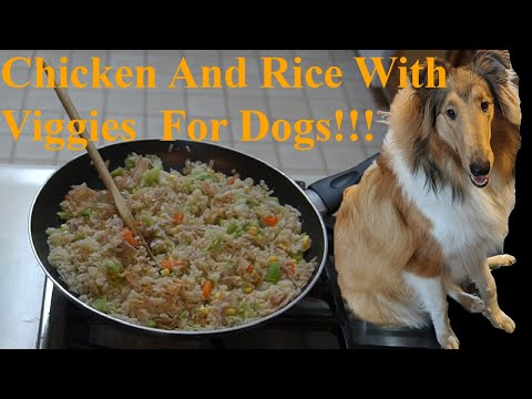 DIY Chicken And Rice With Veggies For Dogs! Nearly 100 Subs!