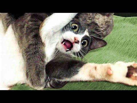 🤣 Funniest 😻 Cats and 🐶 Dogs - Awesome Funny Animals' Life😇