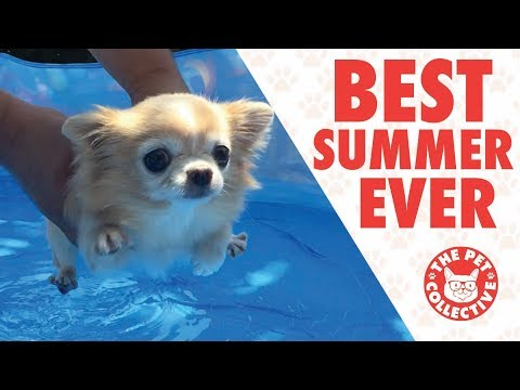 Pets Who Had A Better Summer Than You | Goodbye Summer 2017