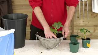 How To Plant Up Strawberry Hanging Basket | Hayes Garden World
