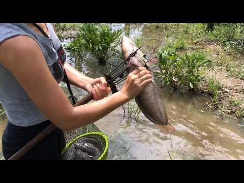 Unbelievable Girl Hunting GIANT Snakehead with Survival Skills