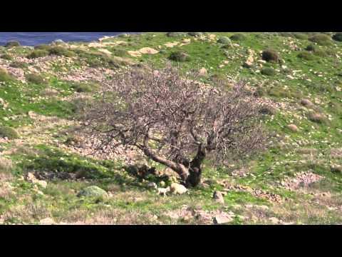 Gökçeada, Çanakkale, Turkey (in 4 minutes)