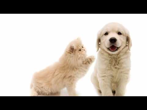 Puppies and Kittens: An adorable slideshow