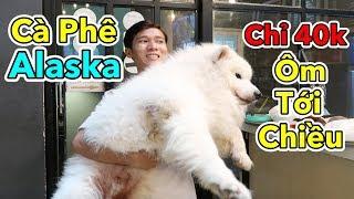 Lâm Vlog - Lần Đầu Đi Quán Cà Phê Chó Alaska | Cafe Thú Cưng | Cafe Pet ở TPHCM