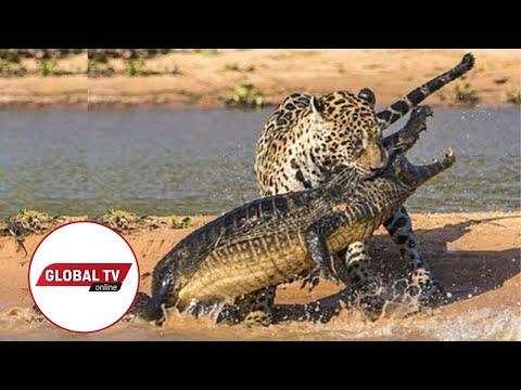 LIVE: Kutoka Mbuga za Wanyama Serengeti Tanzania
