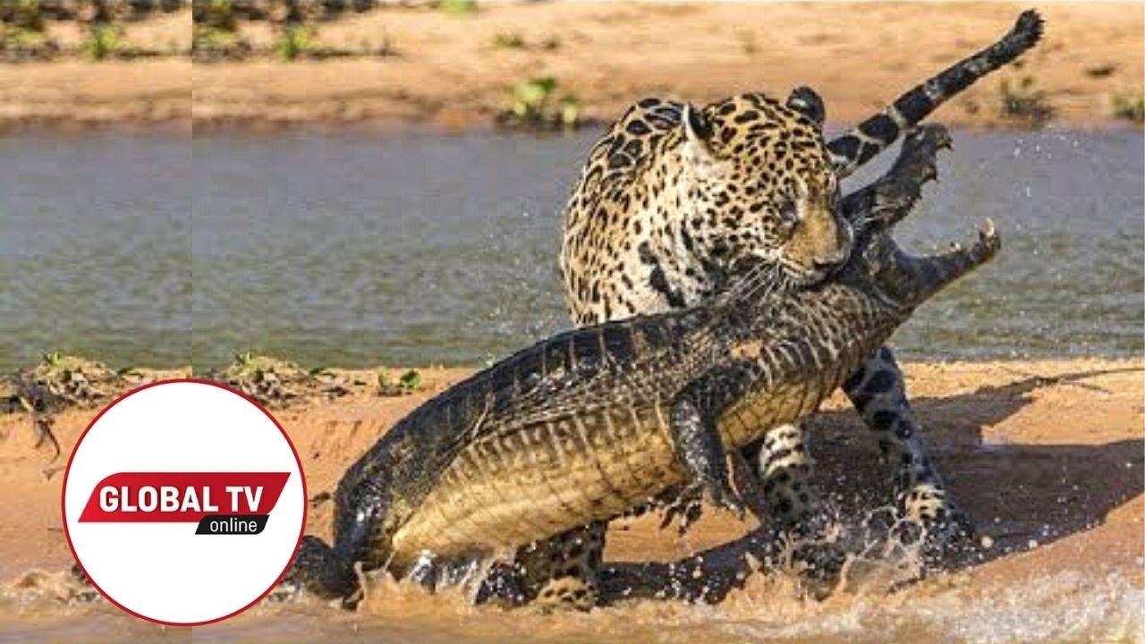 Download LIVE: Kutoka Mbuga za Wanyama Serengeti Tanzania