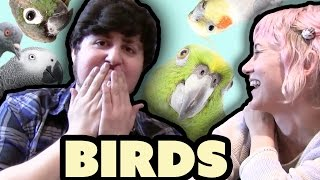 JonTron Bird Buddies
