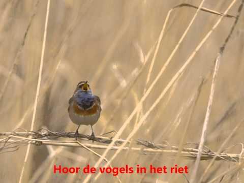 Vogels in de lente (lied)