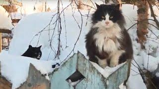 В одном из дачных посёлков под Архангельском появилась кошачья деревня