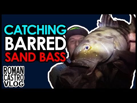 Barred Sand Bass Fishing : Legal Sand Bass?