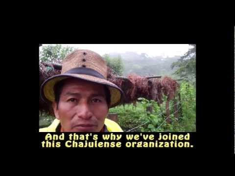 Guatemalan Coffee Farmer Pedro Pacheco -  Cafe Campesino Fair Trade