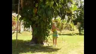Elfi -  breadfruit-tree in the garden of Ansell