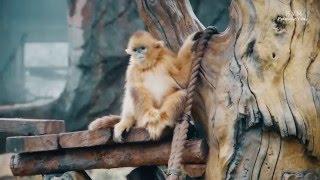 Обитатели зоопарка в г. Далянь (Китай). The inhabitants of the zoo in the city of Dalian (China)(Некоторые обитатели зоопарка в Даляне (Китай). Забавные))), 2016-05-09T17:33:21.000Z)