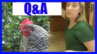 Most Efficient Chicken Coop Tour (Questions & Answers)