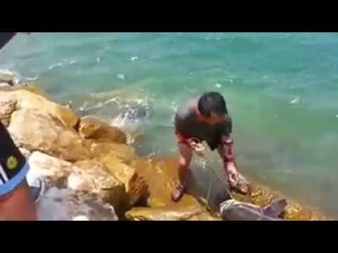 doha fishing thakira cobia 25kg