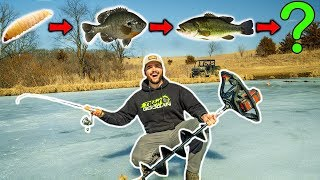 Impossible FOOD CHAIN Fishing Challenge on My BACKYARD POND!!!