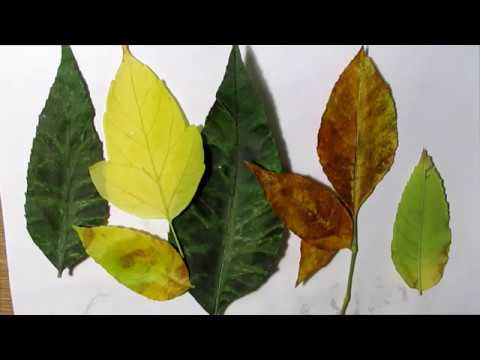 Как выглядит гербарий из листьев